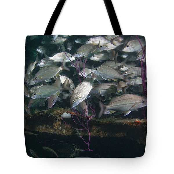 A Large School Of Tomtate Tote Bag by Michael Wood