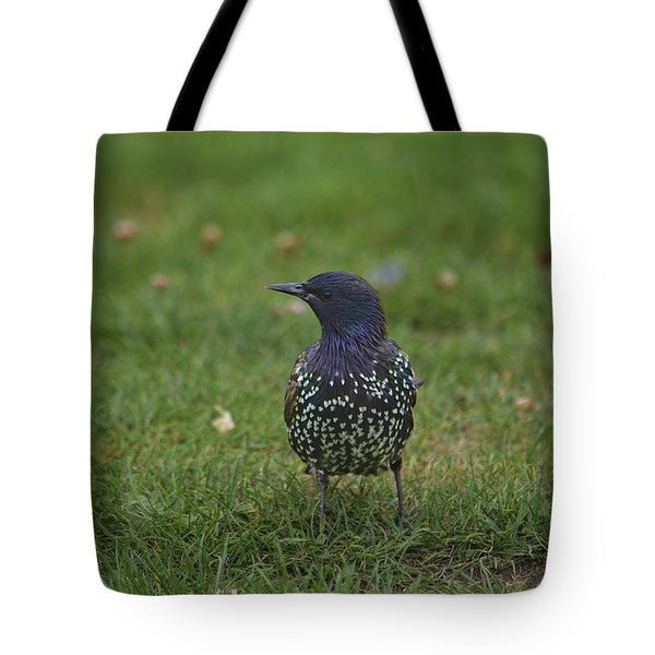 Tote Bag featuring the photograph A Little Bird  by Alex King