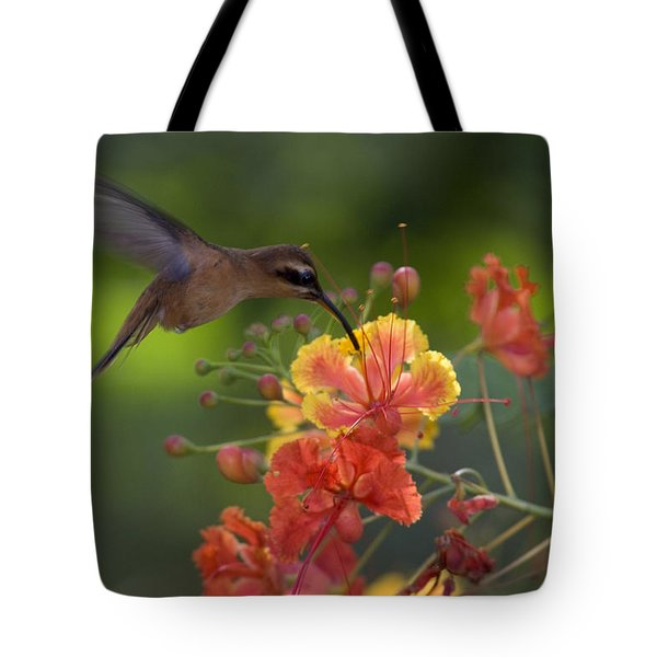 A Little Hermit Hummingbird Drinking Tote Bag