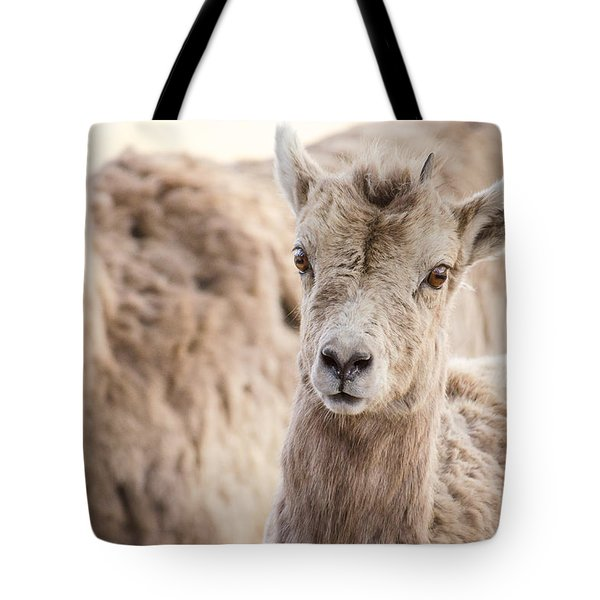 Tote Bag featuring the photograph A Little Lamb Cuteness by Yeates Photography