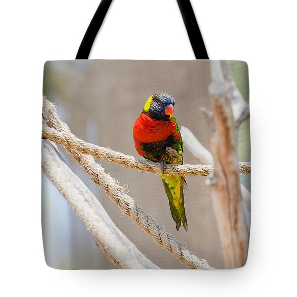 A Lorikeet From The Rainforest Tote Bag