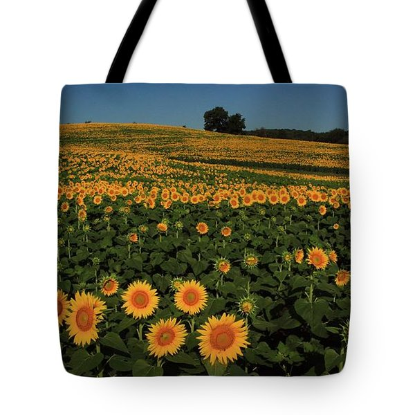 Tote Bag featuring the photograph A Lot Of Birdseed  by Chris Berry