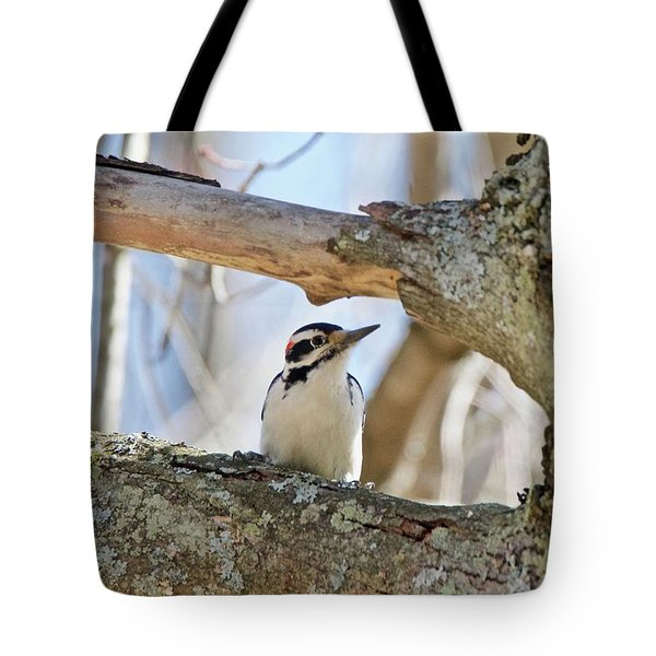 Tote Bag featuring the photograph A Male Downey Woodpecker  1111 by Michael Peychich