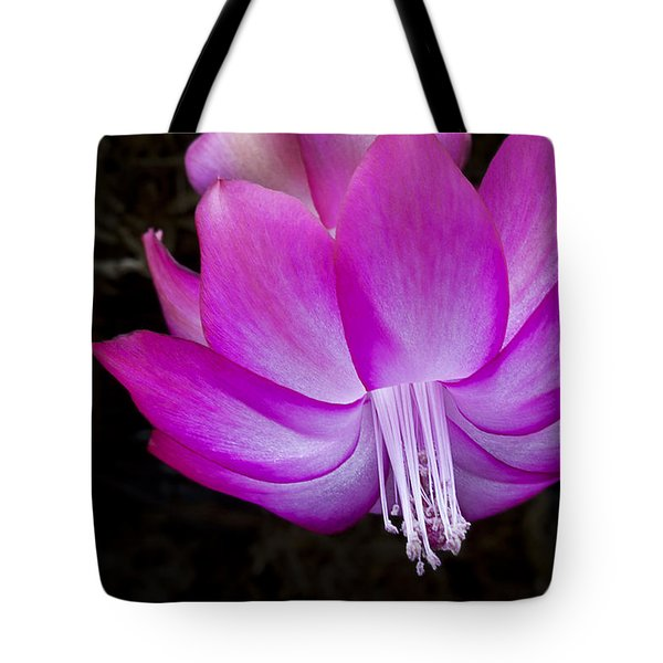 Tote Bag featuring the photograph A Pink Christmas Cactus by Ken Barrett