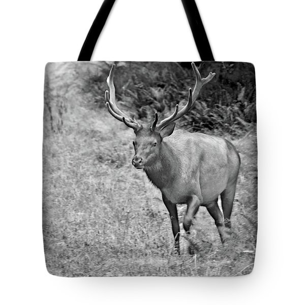 A Rack Of Antlers - Roosevelt Elk - Olympic National Park Wa Tote Bag by Christine Till
