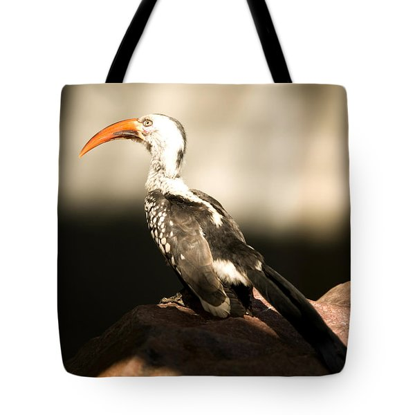 A Red-billed Hornbill At The Lincoln Tote Bag