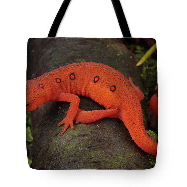 A Red Eft Crawls On The Forest Floor Tote Bag