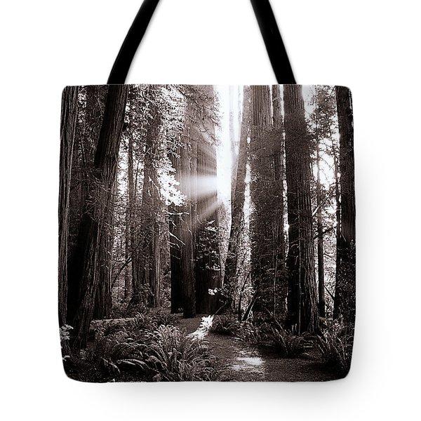 A Redwood Forrest  Tote Bag