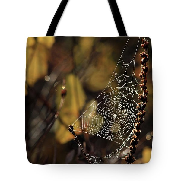 A Spiders Creation Tote Bag by Karol Livote