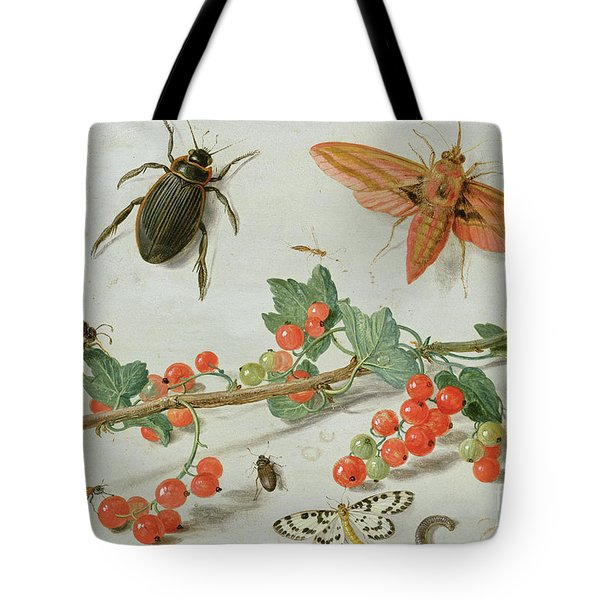A Sprig Of Redcurrants With An Elephant Hawk Moth, A Magpie Moth And Other Insects, 1657 Tote Bag
