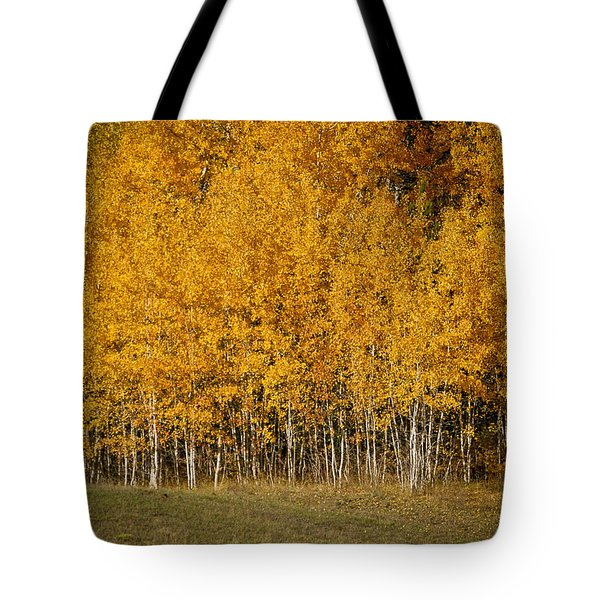 A Stand Of Aspen Tote Bag