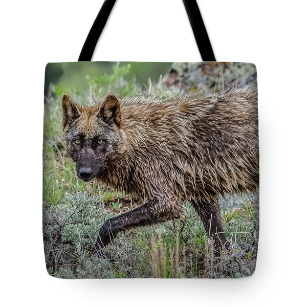 Tote Bag featuring the photograph A Star In Lamar by Yeates Photography