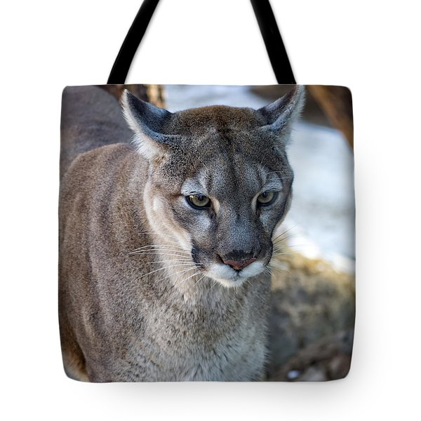A Stunning Mountain Lion Tote Bag