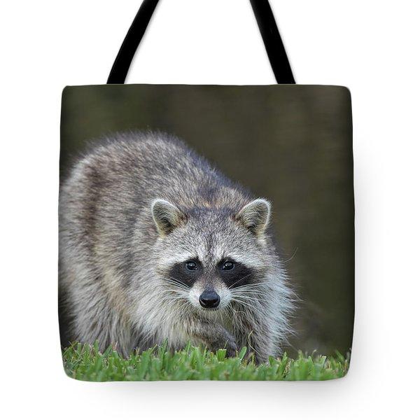 A Surprised Raccoon Tote Bag
