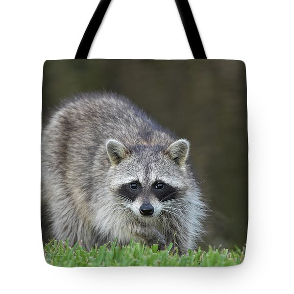 A Surprised Raccoon Tote Bag