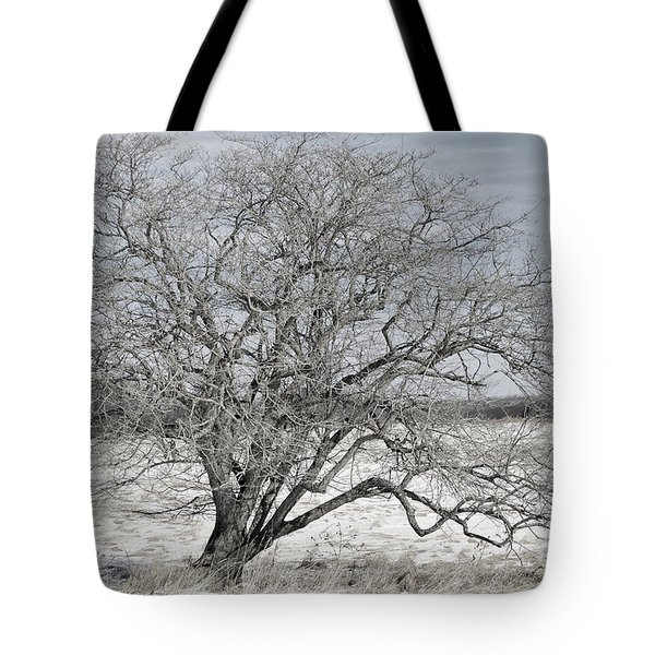 A Tree In Canaan Tote Bag by Randy Bodkins