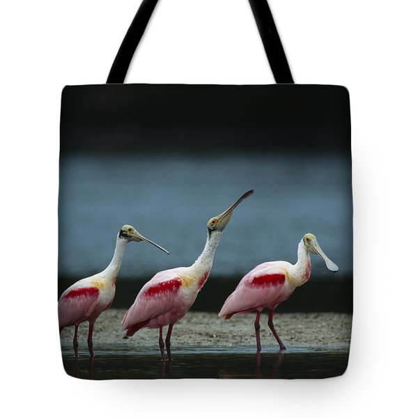 A Trio Of Roseate Spoonbills Tote Bag