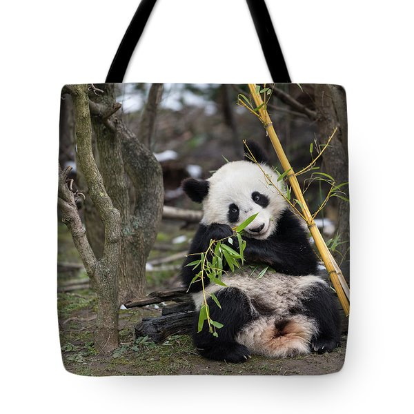 A Young Giant Panda Sitting And Eating Bamboo Tote Bag