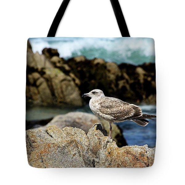 A Young Western Gull At Pacific Grove Tote Bag