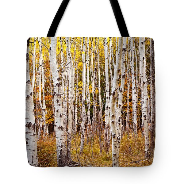 Acadia Birch Tote Bag