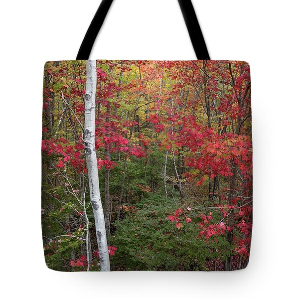 Tote Bag featuring the photograph Acadia Fall Colors by Paul Schultz