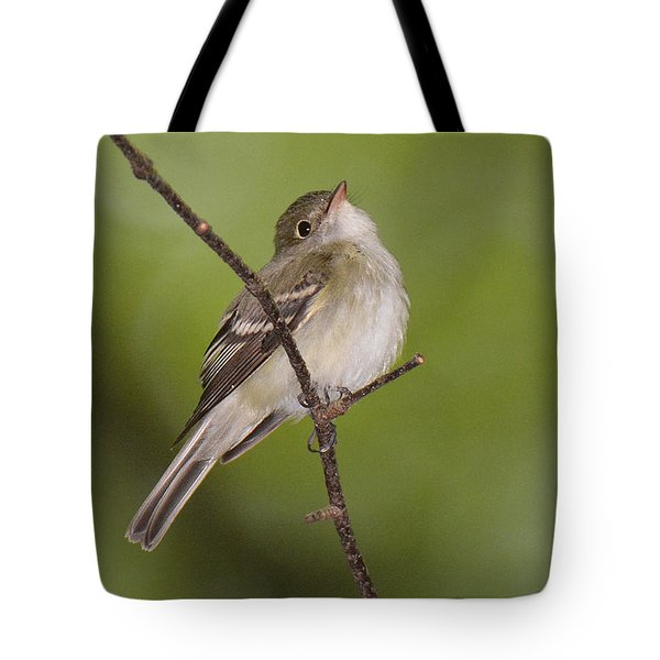 Acadian Flycatcher Tote Bag