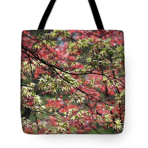 Acer Leaves In Spring Tote Bag