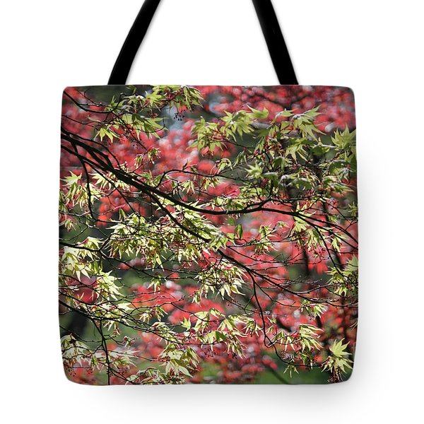 Acer Leaves In Spring Tote Bag
