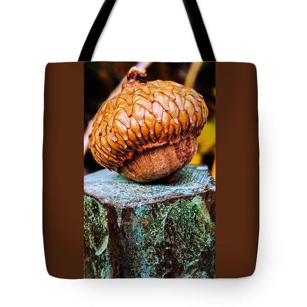 Acorn Tote Bag by Bruce Carpenter