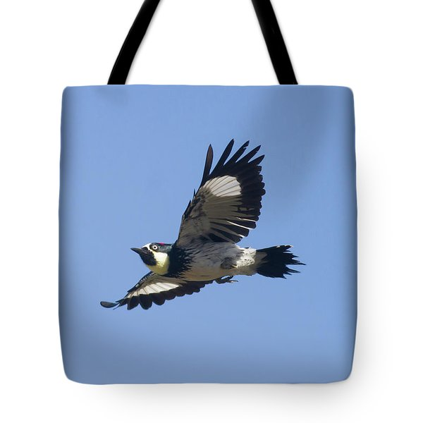 Acorn Woodpecker Tote Bag