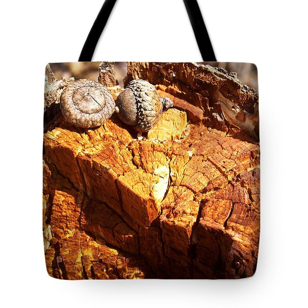 Tote Bag featuring the photograph Acorns - The Cycle Of Life Continues  by Shawna Rowe