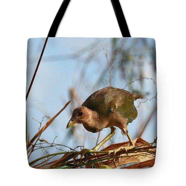 Tote Bag featuring the photograph Adolescent Purple Gallinule by Sally Sperry