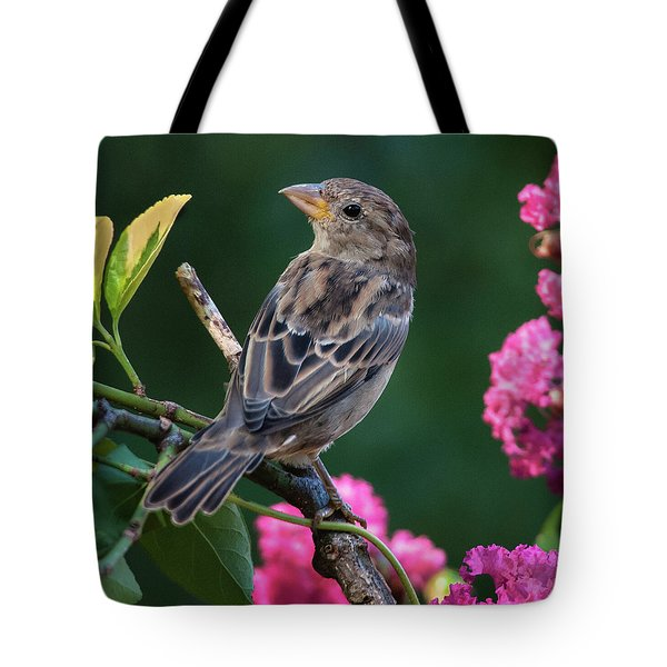 Adorable House Finch Tote Bag by Jim Moore