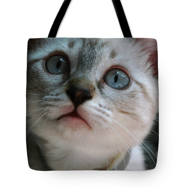 Tote Bag featuring the photograph Adorable Kitty  by Kim Henderson