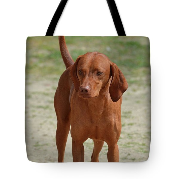 Adorable Redbone Coonhound Standing Alone Tote Bag
