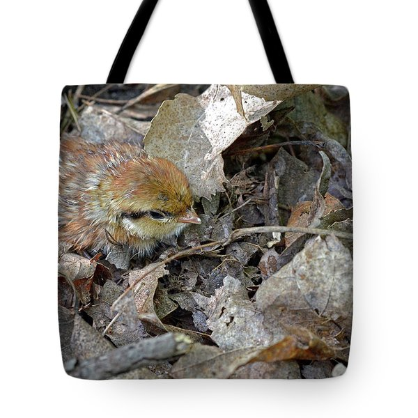 Adorable Ruffed Grouse Chick Tote Bag