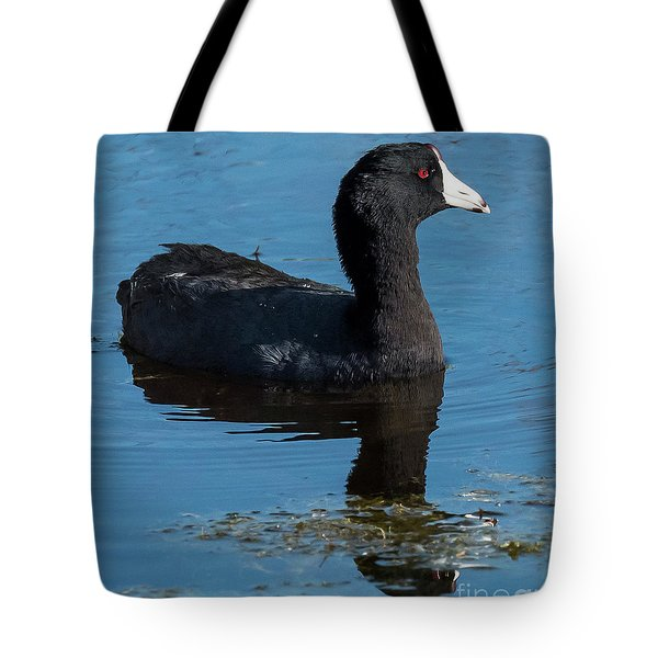 Tote Bag featuring the photograph Adult American Coot by Michael D Miller
