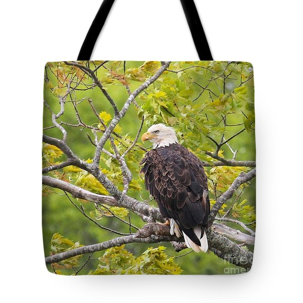 Adult Bald Eagle Tote Bag