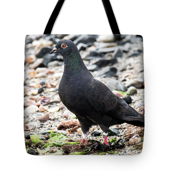 Tote Bag featuring the photograph Adult Dark Rock Pigeon On Beach by Michael D Miller