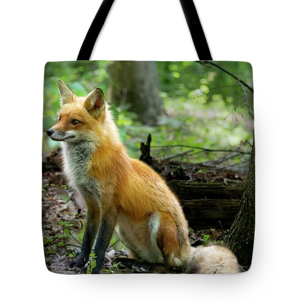 Adult Red Fox Sitting Tote Bag