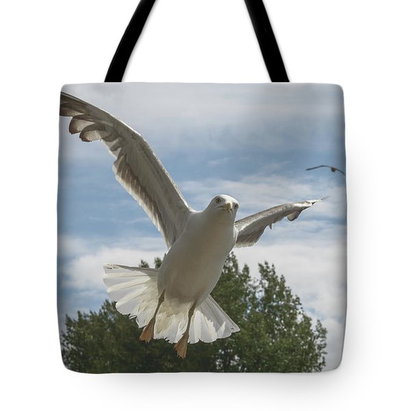 Adult Seagull In Flight Tote Bag
