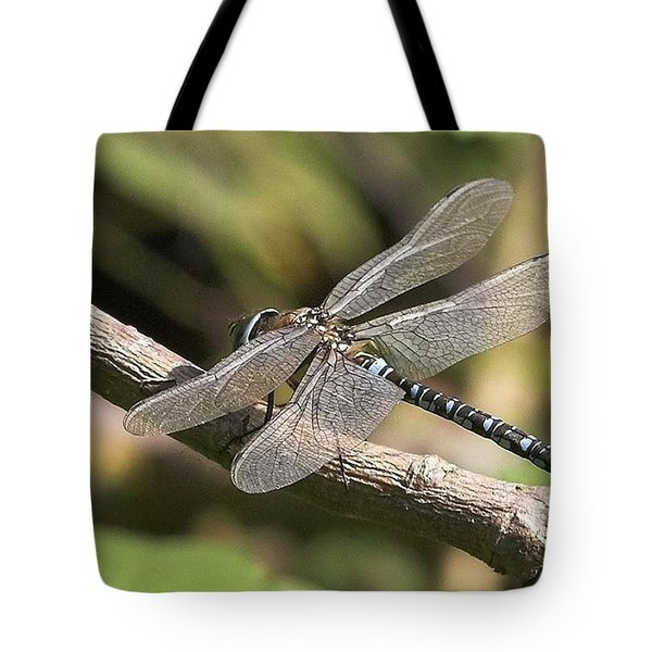 Aeshna Juncea - Common Hawker Taken At Tote Bag