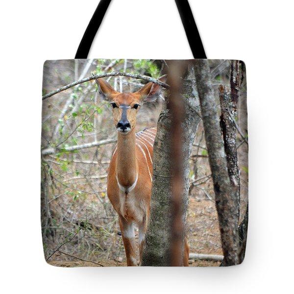 Africa Safari Bushbuck 2 Tote Bag