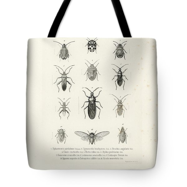 African Bugs And Insects Tote Bag