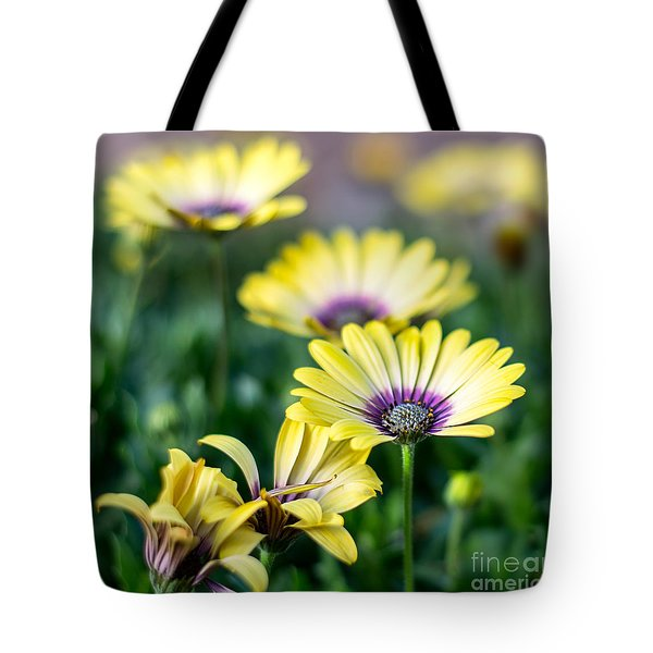 African Daisy Tote Bag