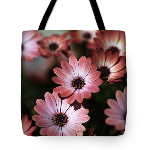 African Daisy Zion Red Tote Bag