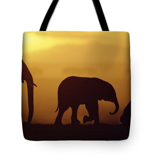 African Elephant Loxodonta Africana Tote Bag by Karl Ammann