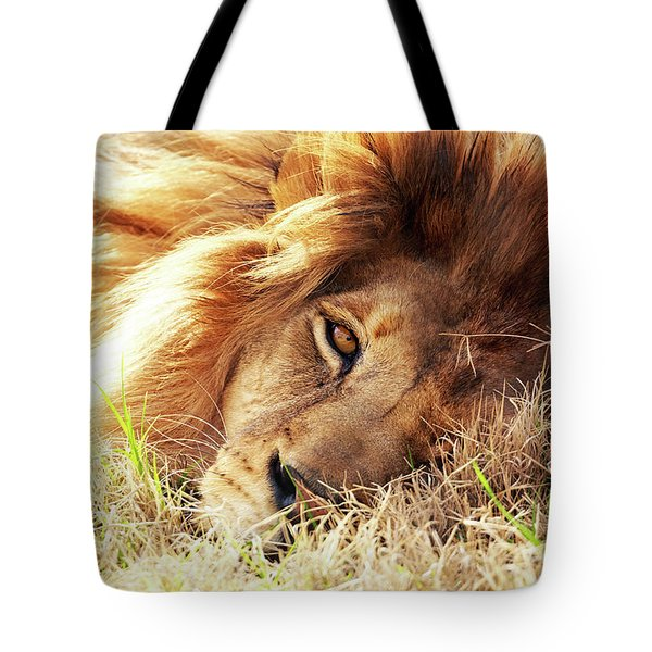 African Lion Closeup Lying In Grass Tote Bag