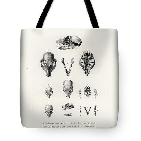 African Mammal Skulls Tote Bag