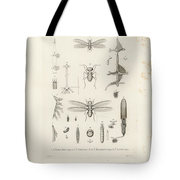 African Termites And Their Anatomy Tote Bag